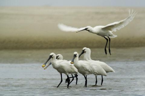 Wandelroute Levensstrijd: 'Langs water en Land' in Zeeland