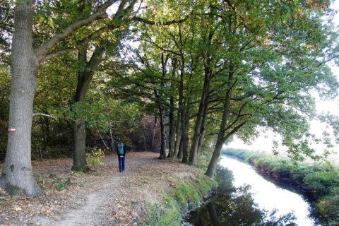 Veluwse Bekenroute: 11km wandelen langs de Molenbeek