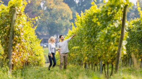 Wijnfietsroute door het heuvellandschap rond Wijndorp Groesbeek