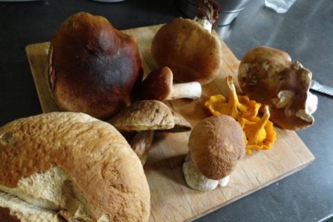 Culinaire paddenstoelenwandeling met paddenstoelkenner van Slow Food