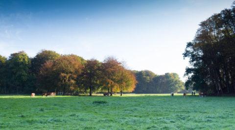 Herfstwandelen door de Haarlemmerhout en rond Elswout