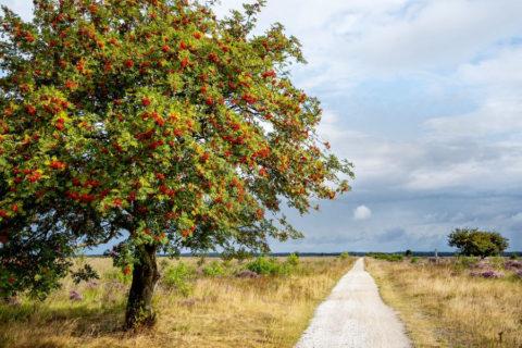 Wandelvakantie mooiste paden van Noord-Drenthe