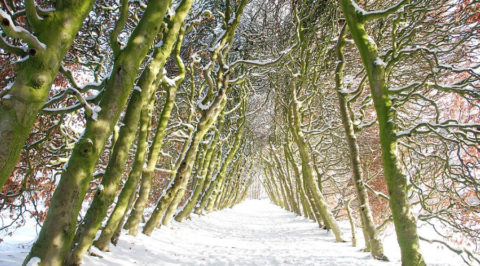 Romantische wandeling door de 'Groene Bedstee' op Landgoed Mariëndaal