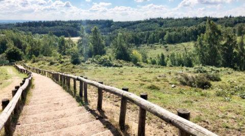 Uitdagend wandelen in natuurgebied Kwintelooijen bij Rhenen