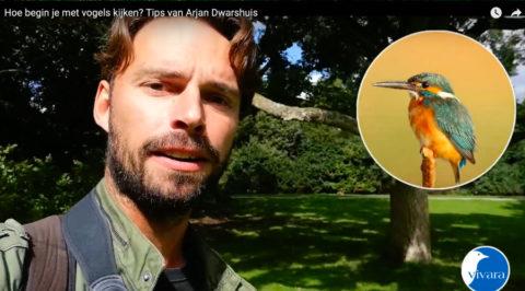 Tips voor de beginnende vogelspotter van Arjan Dwarshuis
