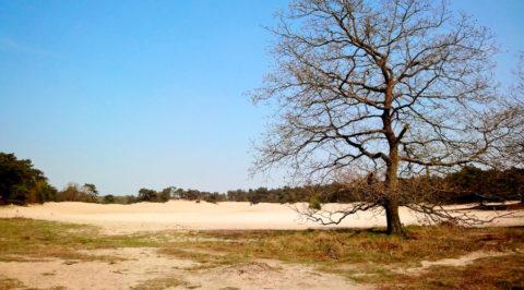 Struinen door de 'Kale Duinen' van het Drents-Friese Wold bij Appelscha