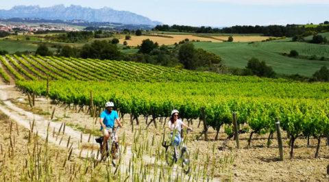 Fietsen en wijnproeven in het Catalaanse wijngebied Penedès