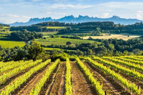 Fietsvakantie door de wijngaarden van Catalonië