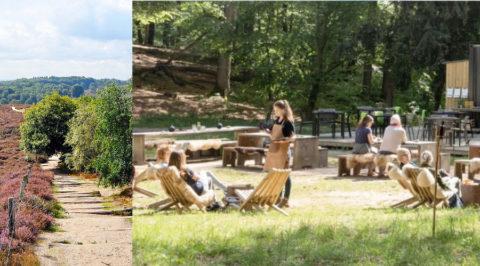 Neerstrijken op hip terras van 'Woodz' midden in natuur van Veluwezoom