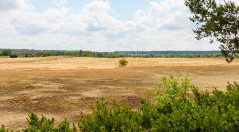 Zwerven over Kootwijkerzand, grootste zandverstuiving van West-Europa
