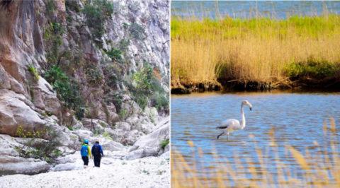 Spaans Biosfeerreservaat Terres de l'Ebre: van ruig gebergte tot lieflijke delta