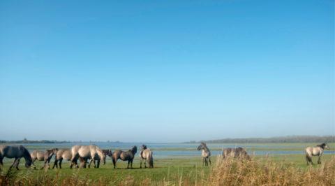 Beleef de Wadden met een 'Rondje Lauwersmeer'