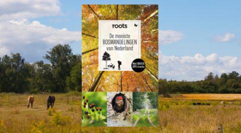 De mooiste boswandelingen van Nederland volgens Roots