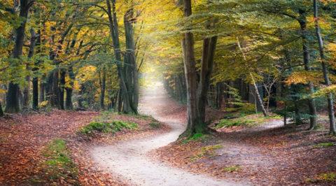 2 & 3 okt: Herfstboswandeling in de bossen van Austerlitz