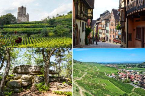Wandelen van noord naar zuid in de Elzas, door bossen, stadjes en wijngaarden