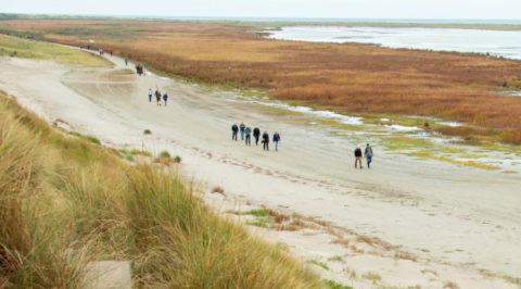 23 okt: Wandelevenement Ameland 'Tussen Slik en Zand'